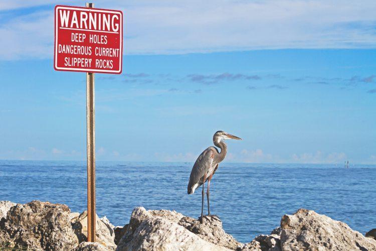 注意すべきことを知る鳥