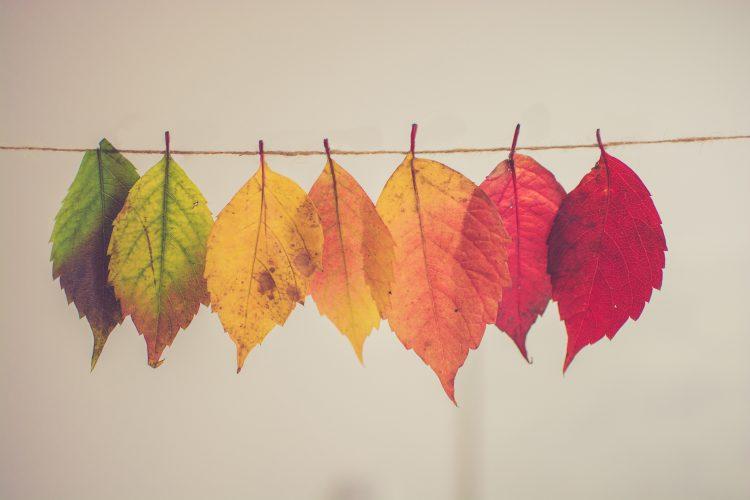 一瞬で姿を変えた紅葉