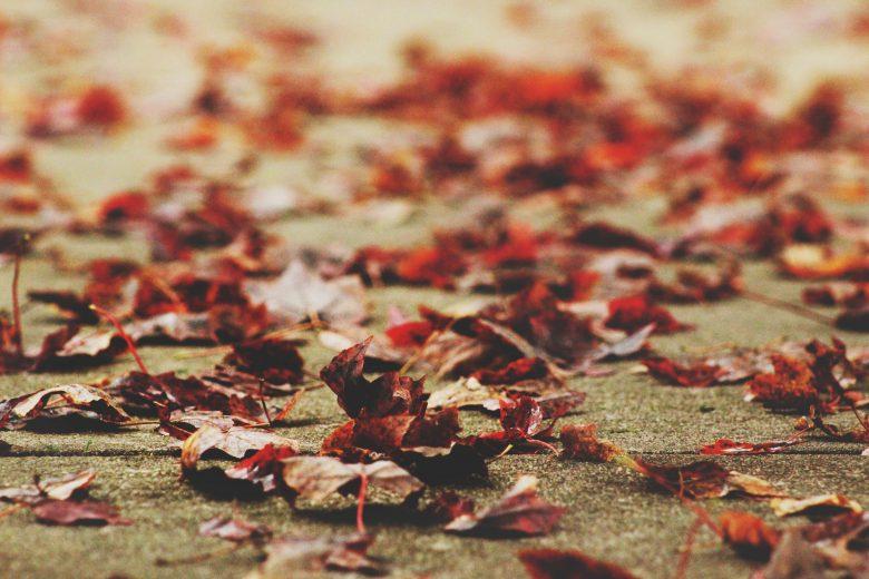 閑散とした道に落ちた葉っぱ