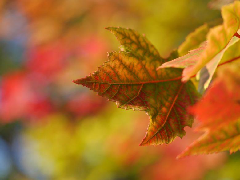 色が変わっていく葉っぱ